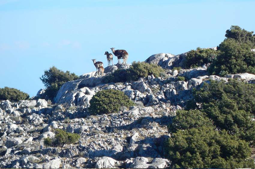 escursioni-tore-solinas-supramonte-oliena-4